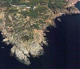 kullen-billede